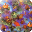 Fish Heavy Transfer Paper